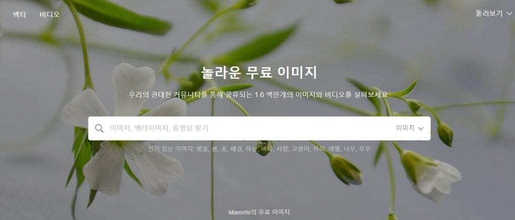 픽사베이 검색창